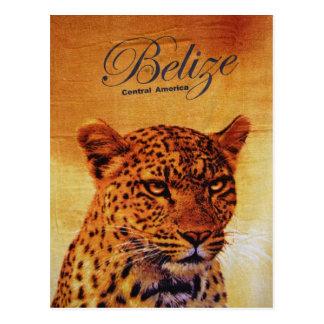 Belize Jaguar Postkarte
