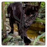 Belize-Stadt-Zoo. Schwarzer Panther Uhr