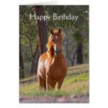 Belle carte d'anniversaire de photo de cheval de c
