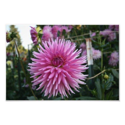 Belle fleur tirage photo