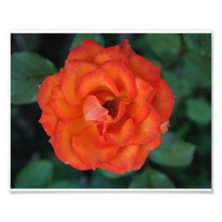 Belle fleur impressions photographiques