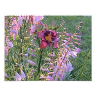 Belle image pourpre de fleur d'hémérocalle photographe