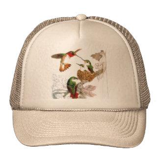 Belle photo de colibris casquette de camionneur