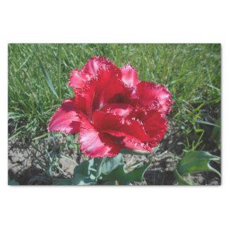 Belle tulipe rouge papier mousseline