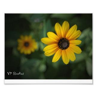Belles fleurs jaunes ! photo