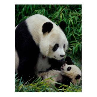Bemuttern Sie Panda und Baby im Bambusbusch, Postkarte