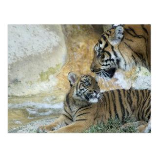 Bengalische entspannende Tiger Postkarte