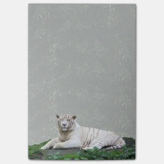 Bengalischer Schwarzweiss-Tiger entspannt und Post-it Klebezettel