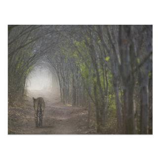 Bengalischer Tiger im Wald in Ranthambore Postkarte