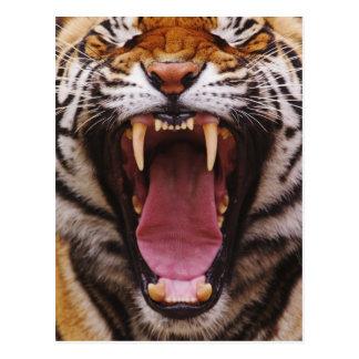 Bengalischer Tiger, Panthera der Tigris 2 Postkarte