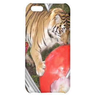 Bengalischer Tiger-Speck-Kasten