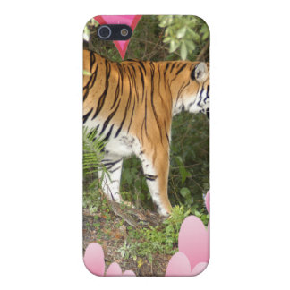 Bengalischer Tiger-Speck-Kasten iPhone 5 Hüllen