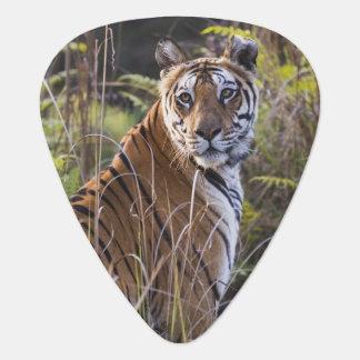 Bengalischer Tigress im hohen Gras, versuchend zu Plektron