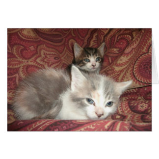 Bequemes Kätzchen Karte