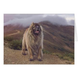 Berg Leonberger Grußkarte