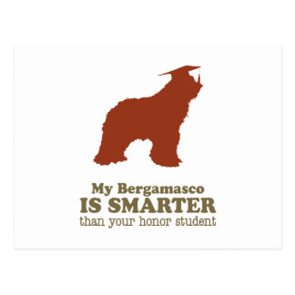 Bergamasco Schäferhund Postkarte