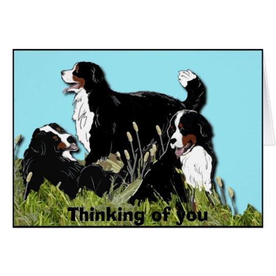 Bernese Gebirgshund Grußkarte