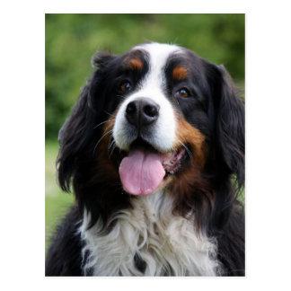 Bernese Gebirgshundepostkarte Postkarte