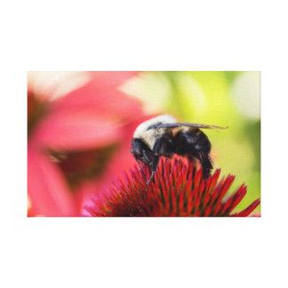 Beschäftigte Biene auf einer Leinwand Echinacea