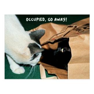 Besetzt, gehen Sie weg! Lustige Katzen Postkarte