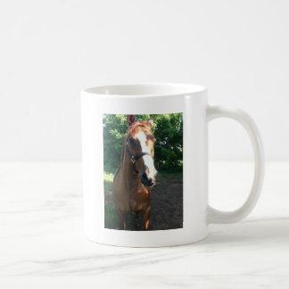 Bessern Sie die Pferdesammlung aus Kaffeetasse