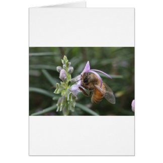 Biene auf Blume Karte