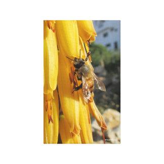 Biene auf einer Aloe-Vera-Blume Leinwanddruck