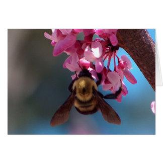Biene auf einer Blüte Karte