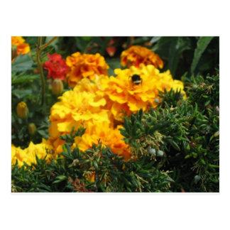 Biene auf Ringelblumen Postkarte