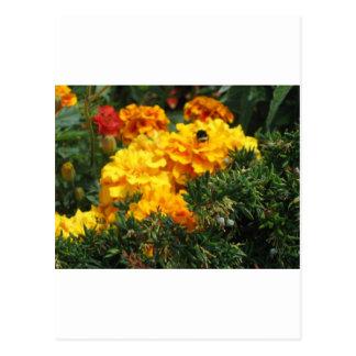 Biene auf Ringelblumen Postkarten