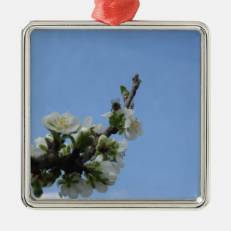 Biene impollinates Blumen des Pflaumenbaums Quadratisches Silberfarbenes Ornament