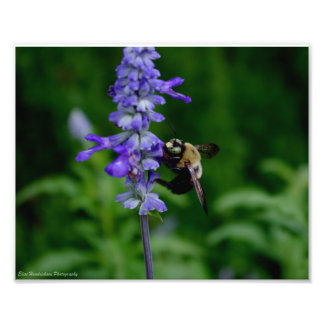 Biene und Blume Kunstphoto