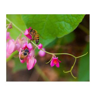 Bienen auf korallenrote Rebe-Blumen-Fotografie Acryldruck