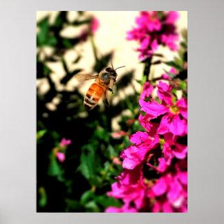 Bienen in Bewegung Poster