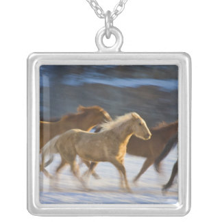 Big Horn-Berge, Pferde, die in den Schnee 2 laufen Versilberte Kette