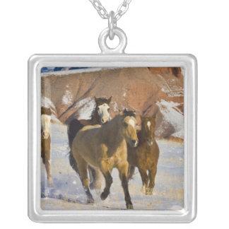 Big Horn-Berge, Pferde, die in den Schnee 3 laufen Versilberte Kette