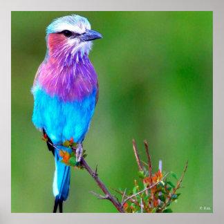 Bird Blue Poster