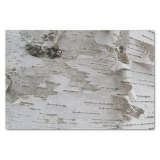 Birken-Baum-Barken-abgezogene alte Foto-Kunst Seidenpapier