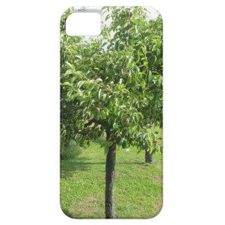 Birnenbaum mit Grün-Blätter und roten Früchten iPhone 5 Etui
