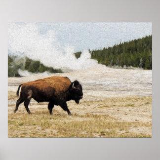Bison mit altem zuverlässigem in Yellowstone Poster