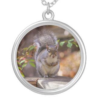 Bitten des Eichhörnchens Versilberte Kette