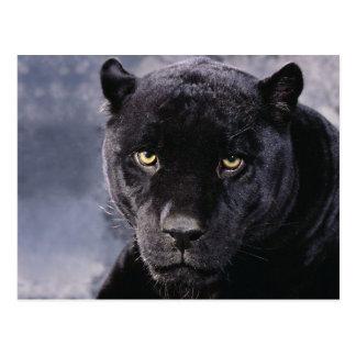 Black Panther Postkarte