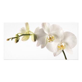 Blanc floral de Dendrobium d'orchidée de jet blanc Photocarte Personnalisée