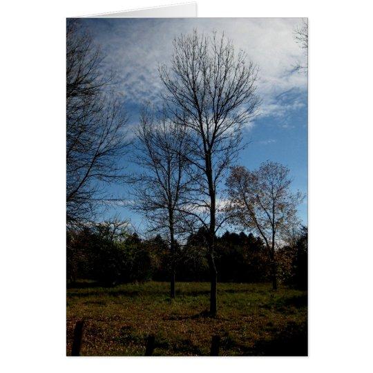 Blank_Ontario Bäume Mitteilungskarte