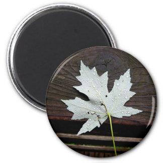 Blatt-Magnet Runder Magnet 5,7 Cm