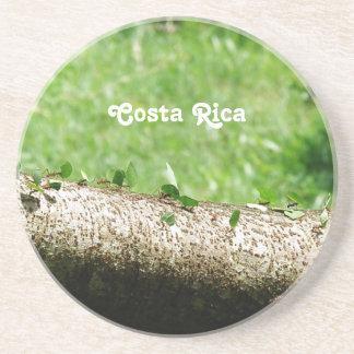 Blatt-Schneider-Ameisen in Costa Rica Getränkeuntersetzer