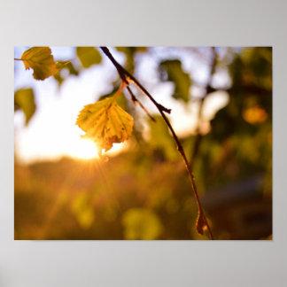 Blätter am Sonnenuntergang Poster
