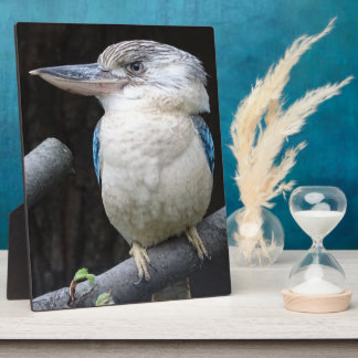 Blau-winged kookaburra fotoplatte