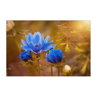Blaue Anemonen-Blumen-Blüten Acryldruck