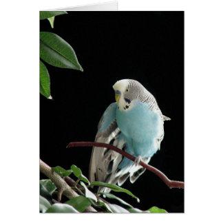 Blaue Budgie Gruß-Karte, Parakeet-Gruß-Karte Karte